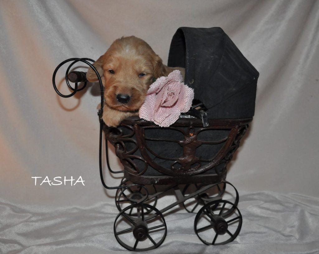 Tasha.jpg1 (Large)