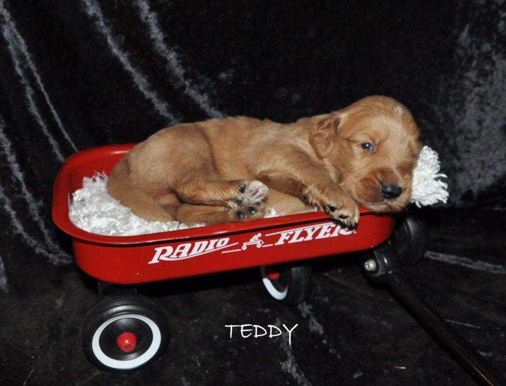 Teddy.jpg1 (Large)