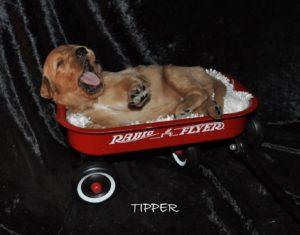 Tipper.jpg1 (Large)