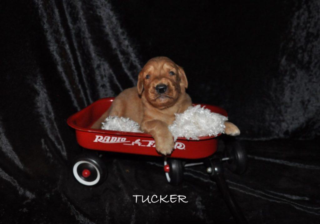 Tucker.jpg1 (Large)