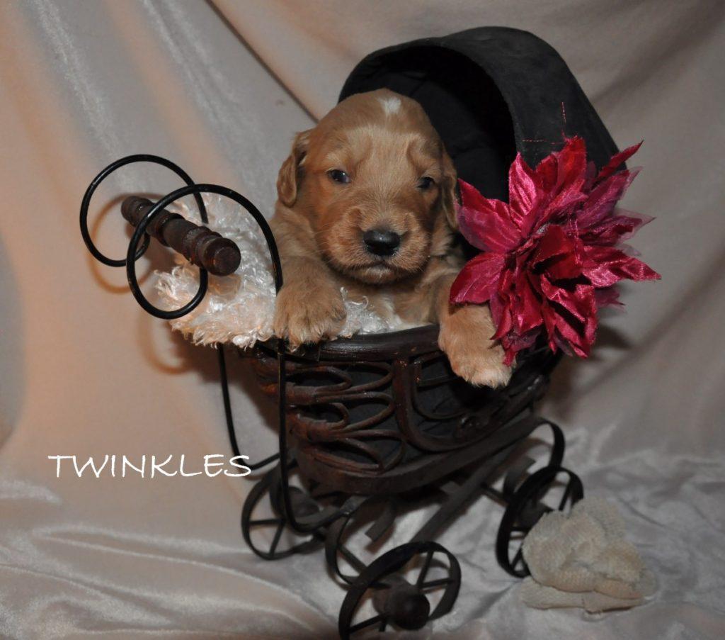 Twinkles.jpg1 (Large)